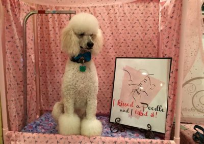 2016 Mardi Gras Pet Expo - Poodle Booth