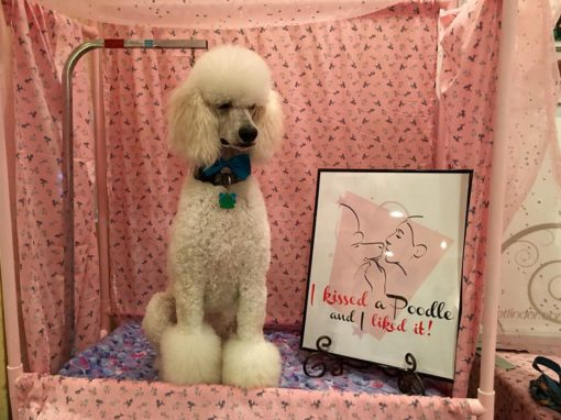 Creole Poodle Rescue